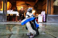 「ペンギンと青石畳」ピーター(島根県)