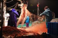 「夜間作業の漁師一家」野島幹(島根県)