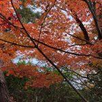 20181127五本松公園 紅葉②