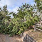 五本松公園倒木